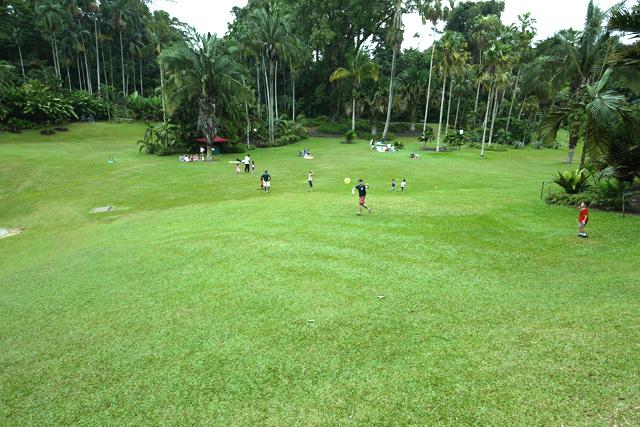 シンガポール植物園の芝生