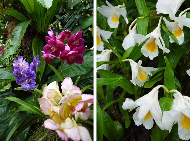 シンガポール植物園のオーキッドガーデン