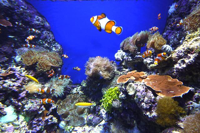 シンガポール セントーサの水族館